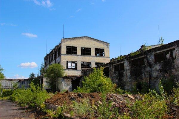 В Воронеже нашли необычный оазис со своей экосистемой на крыше заброшенного завода