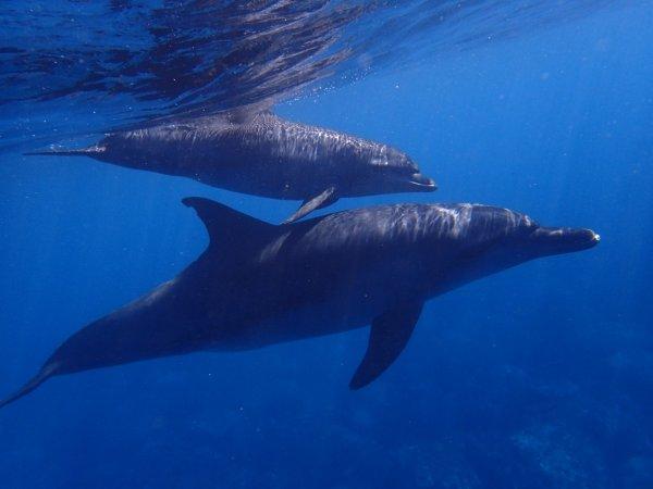 В Одессе самка дельфина родила прямо во время представления