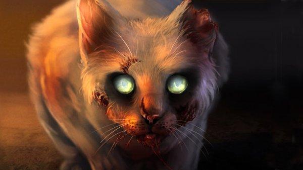 В США кошка-мутант преследует местных жителей