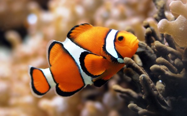 Необычная встреча рыбок и сигареты удивила пользователей Сети