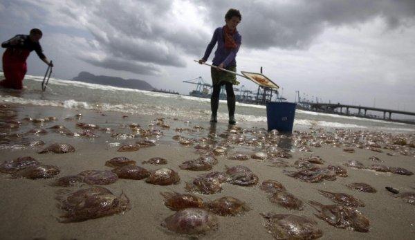 Огромные медузы оккупировали испанские пляжи