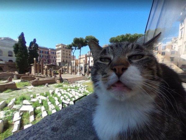 Попавший на Google-карты недовольный римский кот прославился в Сети