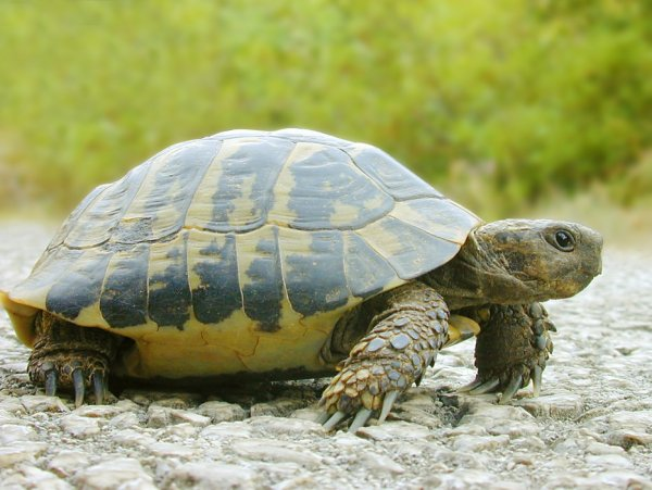 Жителю Эстонии спустя три года вернули пропавшую на озере черепаху