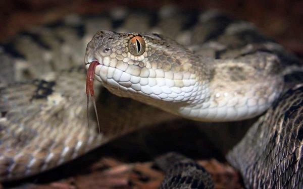 Китаянка впала в кому из-за укуса змеи, из которой хотела приготовить вино