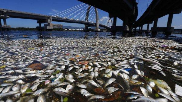 В Германии из-за жары задыхается рыба