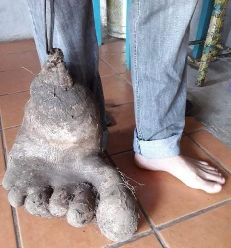 Фермеры из Бразилии вырастили «человеческую ногу» из картофеля