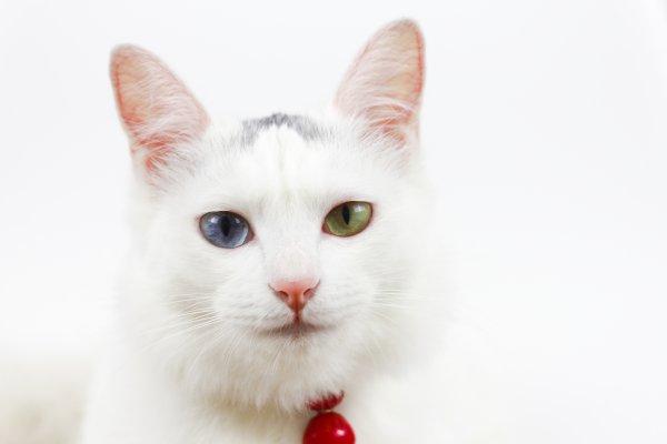 Кошка-провидец предрекла начало войны в Лондоне