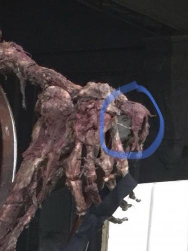 Охотники за привидениями обнаружили сверхъестественное в кинотеатре Ноттингема