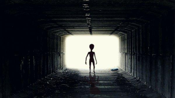 В Австралии сняли на камеру прозрачного инопланетянина