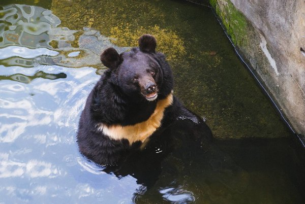 Американка запечатлела на видео отдых медведя в ее гамаке