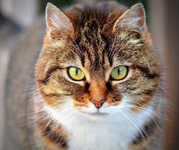 «Проклятый» кот напал на американца и заразил его гигантскими фурункулами