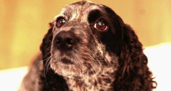 В Британии ученый попытался клонировать свою мертвую собаку