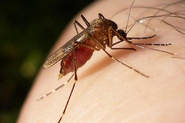 27 жителей Канады заболели лихорадкой Западного Нила