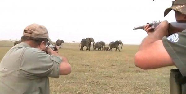 В Намибии слоны обратили в бегство охотников, убивших их сородича