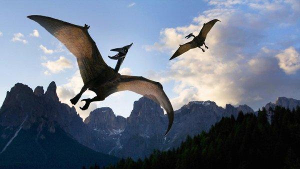 Огромный птерозавр пролетел в небе над Огайо – очевидцы