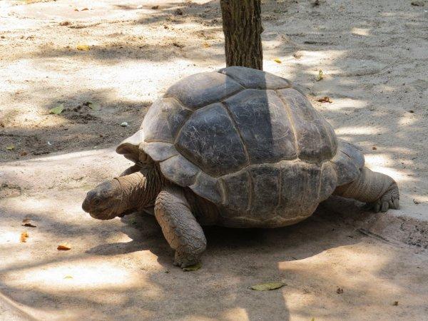 На Галапагосских островах похитили более 100 гигантских черепах