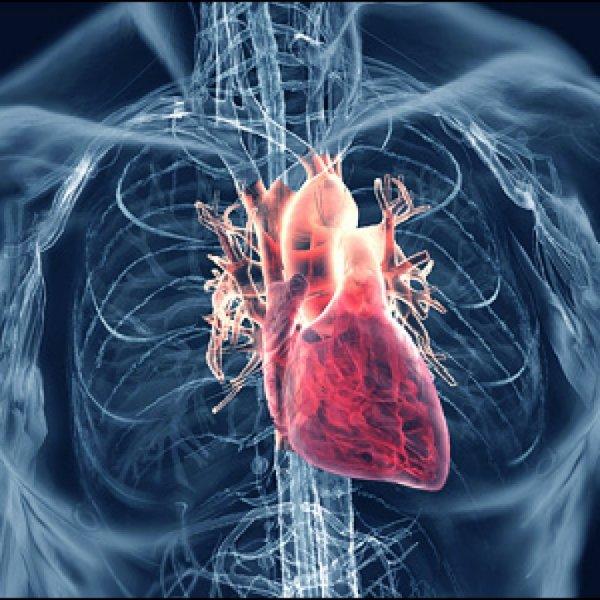 10-летний мальчик поразил ученых самым быстрым сокращением сердца