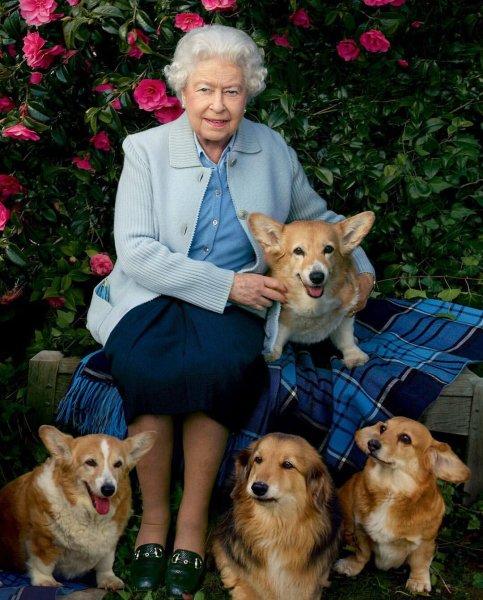 СМИ: Неизвестный маньяк отравил любимую собаку внучки королевы Елизаветы
