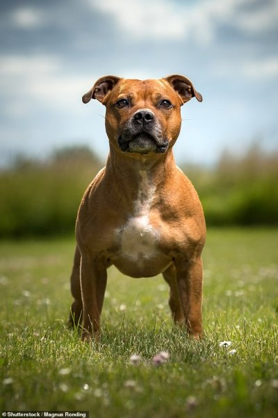 Британские эксперты назвали самую популярную породу собак
